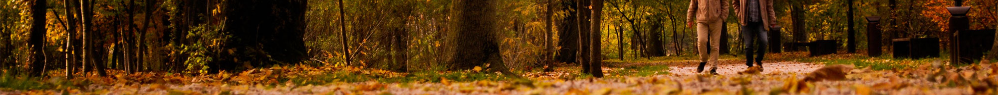 Fall banner image