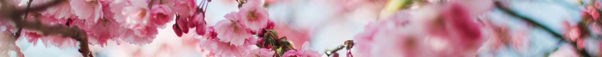 Spring banner image