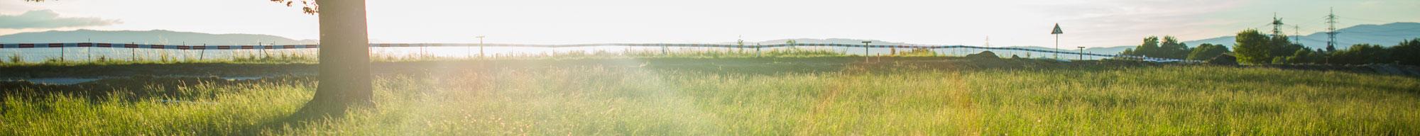 Summer banner image